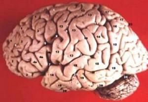 Otak yang senantiasa bersujud