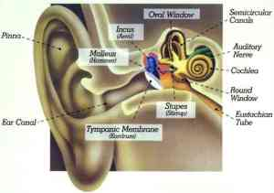 Telinga Manusia